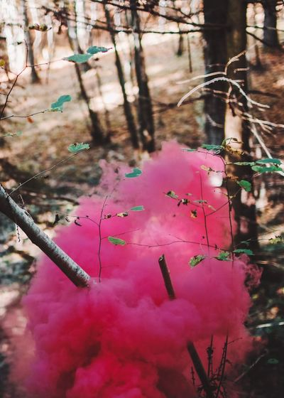 Forest Woods Colour Red Smoke Nature No People Pink Color Day Outdoors Branch Plant Beauty In Nature Close-up Tree