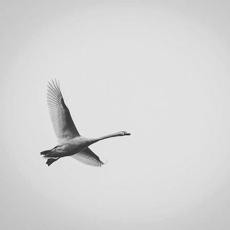 One day I fly away.... Nature Pictures Beautiful Blackandwhite Blackandwhitephotography Fly Sky Flyaway Instaphoto Peacefortheworld