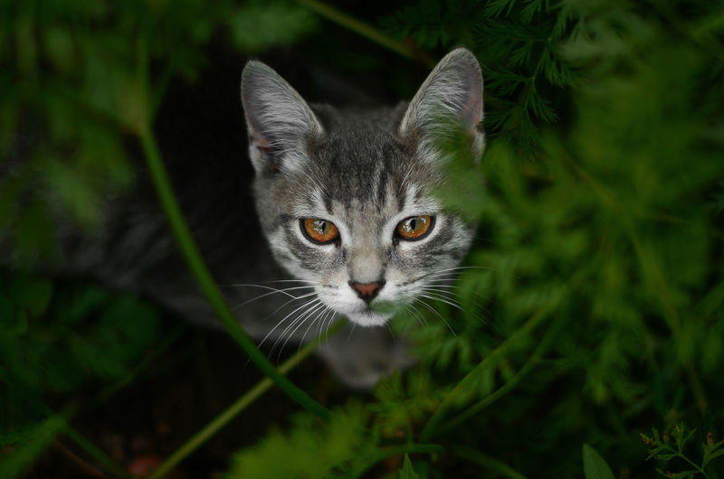 Portrait of cat by plant outdoors