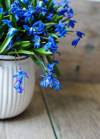 Close-up of blue flower pot on table