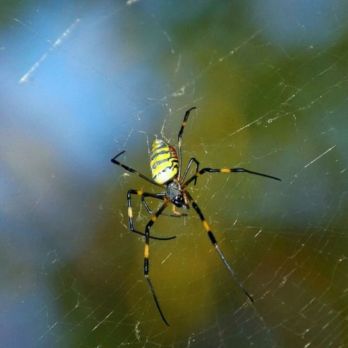 Spider Nature_collection EyeEm Nature Lover Macro_collection