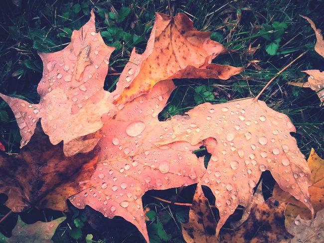 Fall Foliage Maine Wilderness Halloween