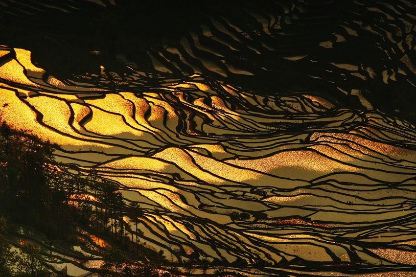 Sunset @yuanyang China Beauty china paddy field beauty in Nature Yuanyang Terraced Fields yuanyang yunnan terraced field yunnan ,China Lines lines and shapes pattern Pattern China Beauty China Paddy Field Beauty In Nature Yuanyang Terraced Fields Yuanyang Yunnan Terraced Field Yunnan ,China Lines Lines And Shapes Pattern Patterns In Nature
