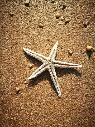 Seastar Stelladimare Starfish  Star Shape Sea Life Outdoors Day Sand Beauty In Nature Shells Creatures Living Nature Sea RedSea Beach Egypt