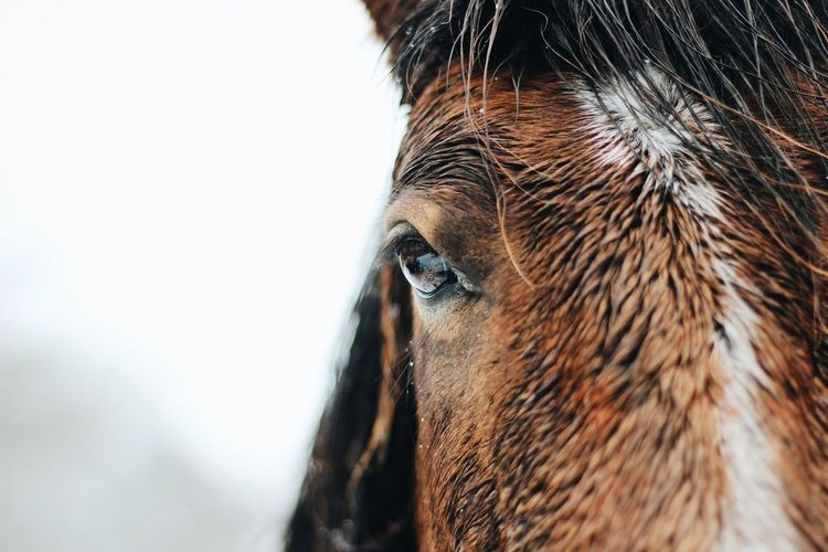 Portrait Closeup Horse Wildhorse Forest Snow Eye Horseeye Eyelash Iris - Eye Eyeball Iris Eyelid Hazel Eyes