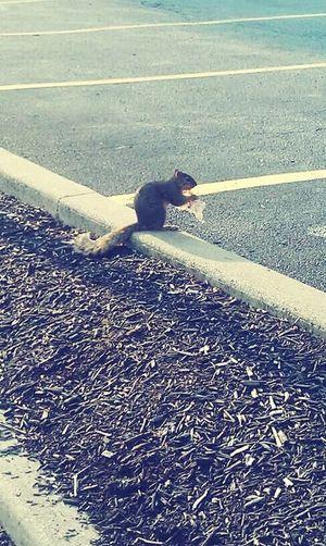 Nature On Your Doorstep Squirrel Lakewood