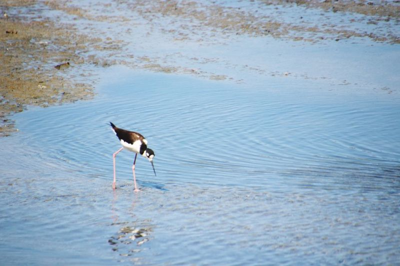 EyeEm Selects Animals In The Wild Animal Wildlife Animal Themes Vertebrate Bird Animal Sand Beauty In Nature