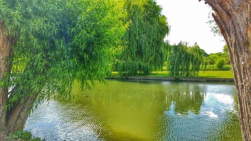 Scenery Landscape Landscape_photography Trees Beautiful Day