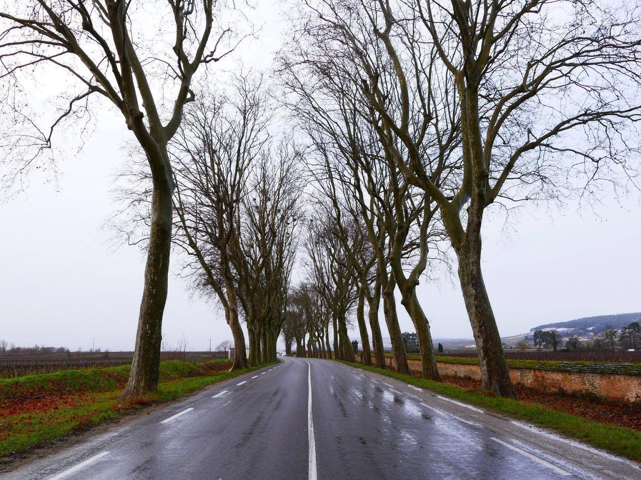 View Of Treelined Wet Asphalt Road