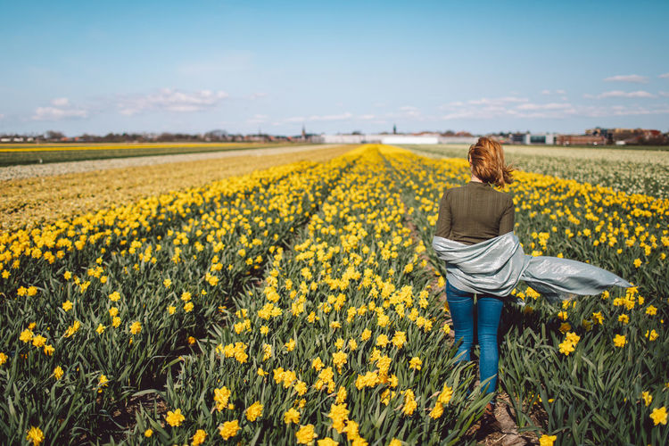 Rear view of woman standing in narcissus field