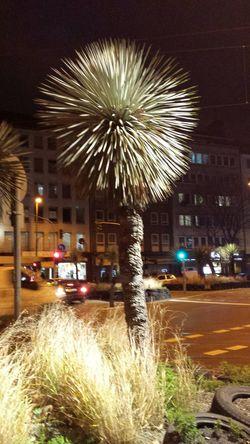 Palm Tree Palm Night Lights Night Night City Night Photography Nightshot Traffic Lights Night Traffic Night Colorz~ Colors Of The Night Street Photo Düsseldorf ♡ City View  Street View Street Life EyeEm Nature Lover No People City At Night Citys At Night