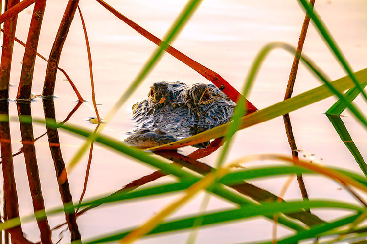 Animal Wildlife Animal Themes Animal One Animal Animals In The Wild Vertebrate Selective Focus No People Nature Day Plant Outdoors Bird Close-up Tree Branch Rodent Beauty In Nature Portrait Perching Animal Head  Alligator