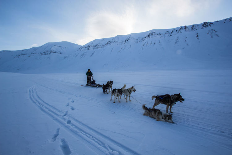 Man with sled dogs on snow covered landscape against sky