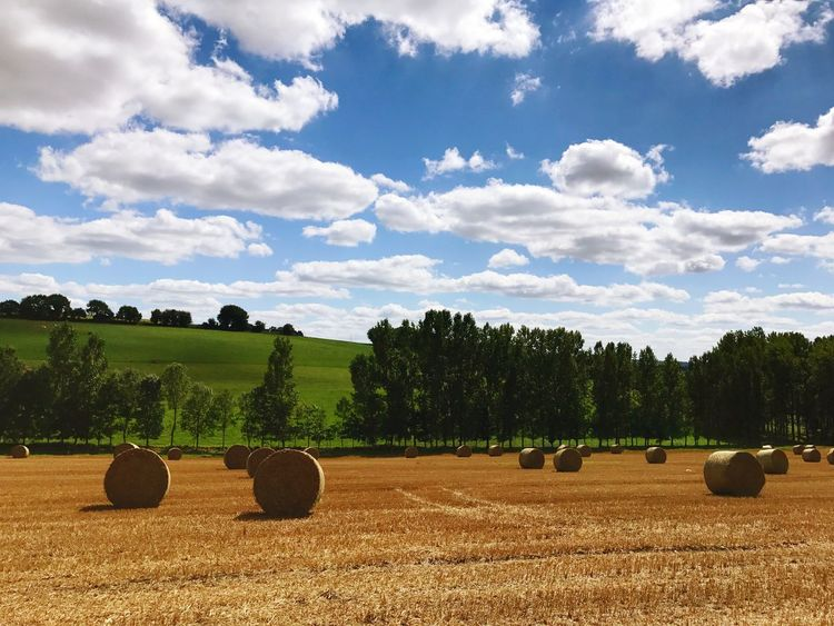Maël-carhaix Brittany Landscape Nature Harvest Hay Bale Harvesting Bale  Field Agriculture Rural Scene Tranquil Scene Tranquility Farm Tree Hay Beauty In Nature Sky Scenics Nature Crop  No People Cloud - Sky Day Outdoors