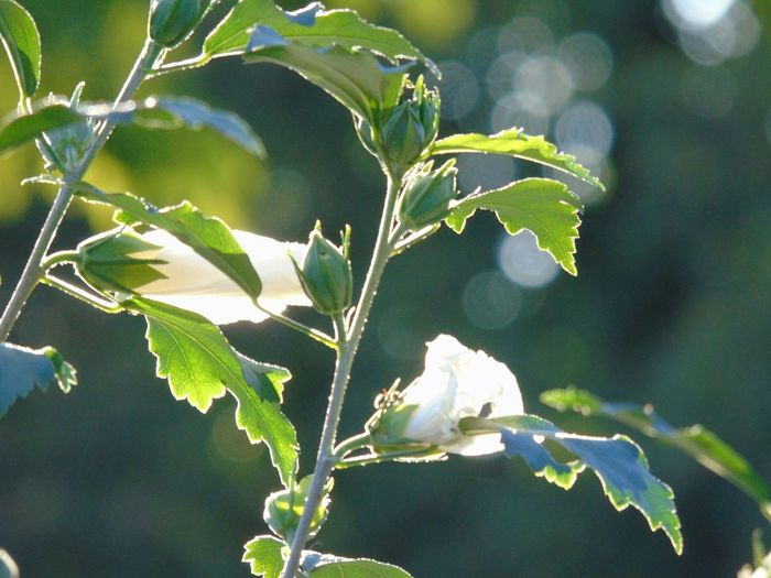 Perspectives On Nature Agriculture Leaf Nature Plant No People Rural Scene Day Growth Close-up Outdoors Freshness Flower Tree Sunset Urbanphotography Branch Tranquility Nature Urbexexplorer Fragility Growth Green Color