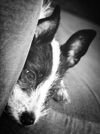 My Dog <3 Relaxing Nikon D80 And EYEemEditing Taking Photos ❤