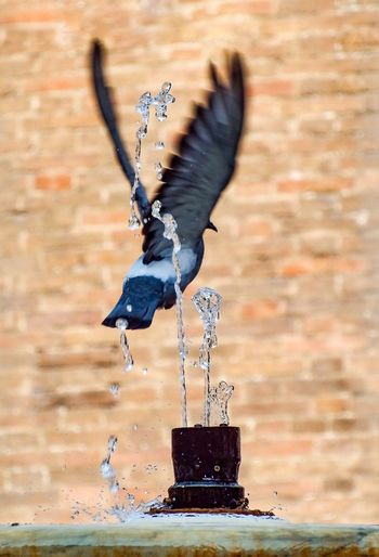 Bird flying in a water