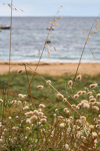 Close-up of plants growing on beach against sky
