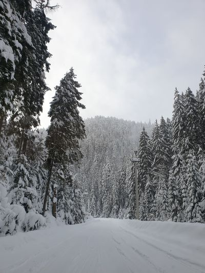 karpaty Tree Snow Mountain Cold Temperature Tree Area Winter Forest Polar Climate Snowcapped Mountain Pine Tree Evergreen Tree Snowboarding Winter Sport Eastern Europe