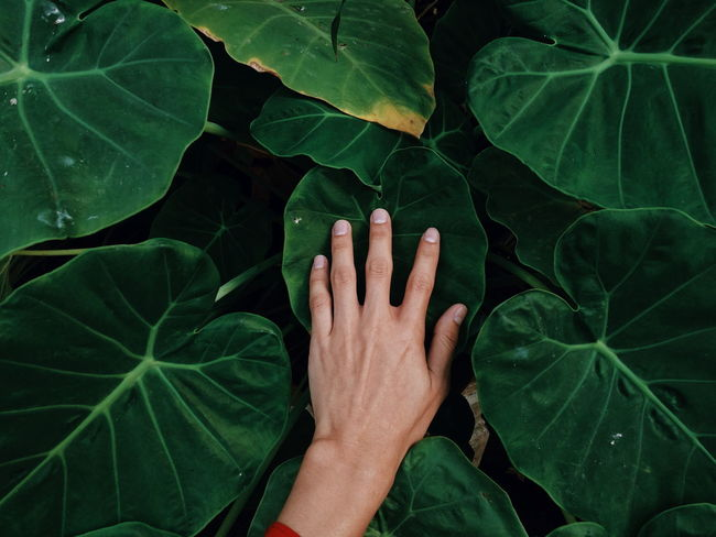 my hand Myself My Hand  Green Tree Green Flower Close-up Artist Simple Green Color Leaf Human Hand Human Body Part High Angle View One Person Adult EyeEmNewHere Outdoors Day