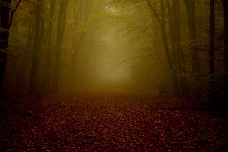Mystic path in