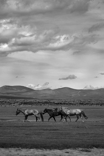 Mongolia Animal Animal Themes Black And White Cloud - Sky Environment Field Group Of Animals Herbivorous Horse Land Landscape Mammal Mountain Nature No People Sky Steppe Монгол улс