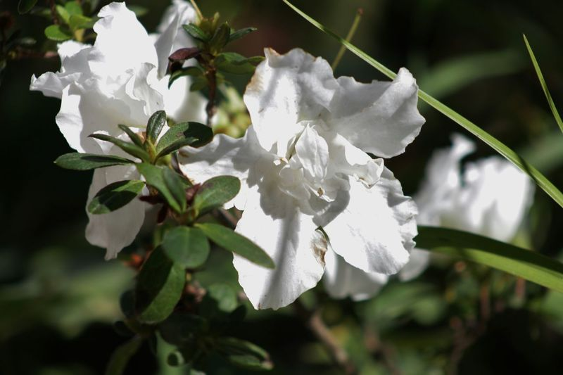 Flowers,Plants & Garden Meu Jardim Flower Of The Day  EyeEm Best Shots - Flowers EyeEm Nature Lover Flower Collection In My Garden