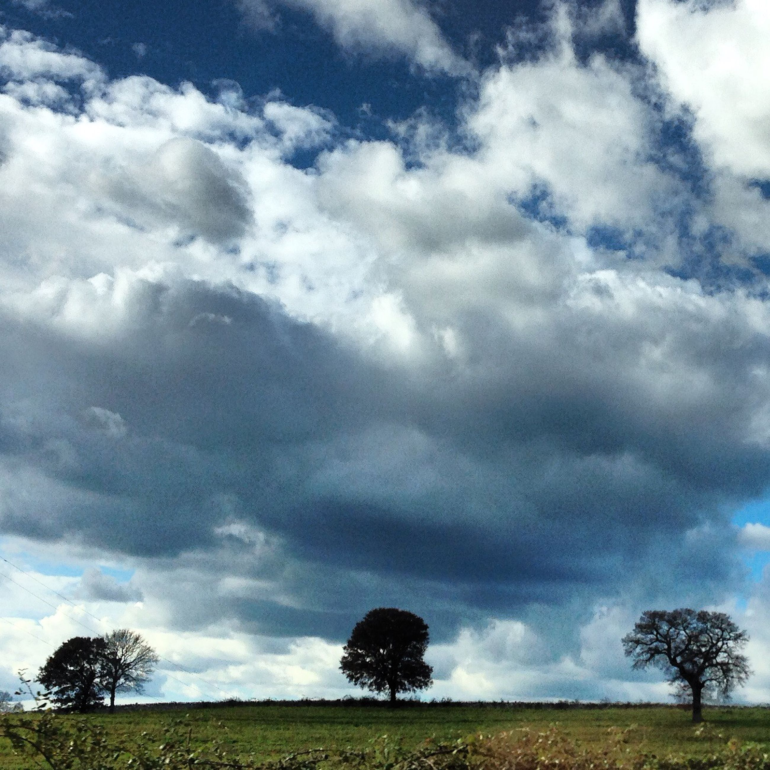 sky, tree, tranquility, tranquil scene, cloud - sky, scenics, field, beauty in nature, landscape, grass, cloudy, nature, cloud, growth, idyllic, non-urban scene, outdoors, no people, grassy, day