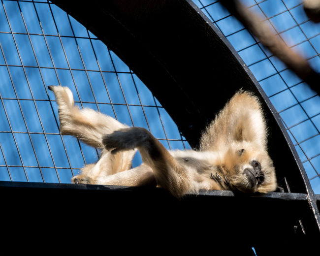 ©Amy Boyle Photography Animal Themes Animals In The Wild Close-up Day Dog Domestic Animals Feline Gibbon Low Angle View Mammal Nature No People One Animal Outdoors Pets Sky Zoology