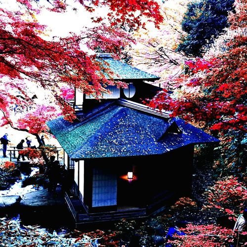YT-style Streamzoofamily Japan Scenery Color Photography