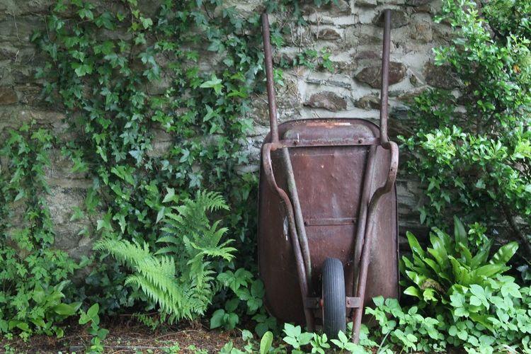 Garden Photography Gardening Garden Stonewall Wheelbarrow Plants Green