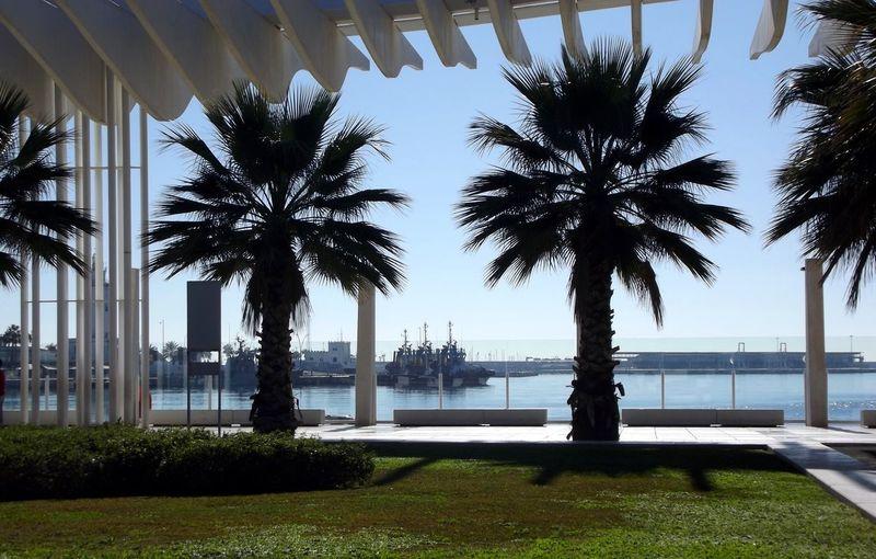 Malaga Malaga Spain Málaga,España Architecture City Day Grass Growth Nature No People Outdoors Palm Tree Puerto Málaga Sea Sky Tree Water