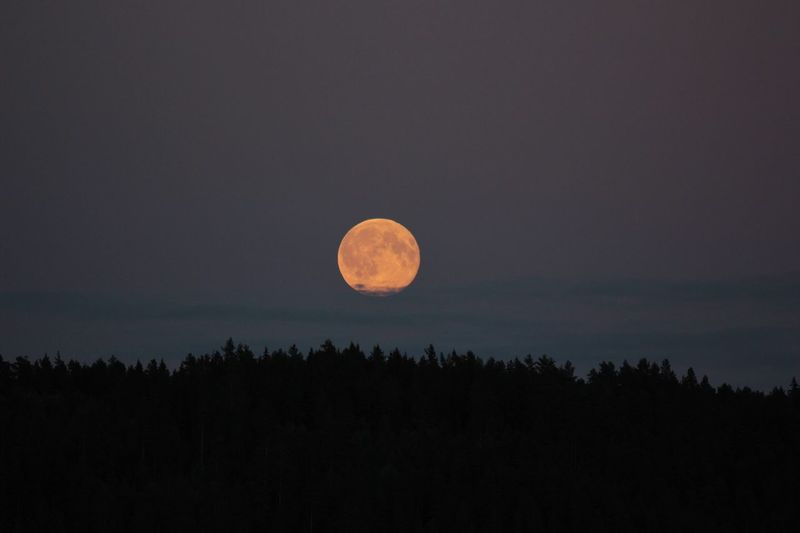 Landing Nature Beauty In Nature Moon Forest Tranquil Scene Full Moon Tranquility Night Scenics Landscape Astronomy
