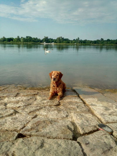 Dog on a lake