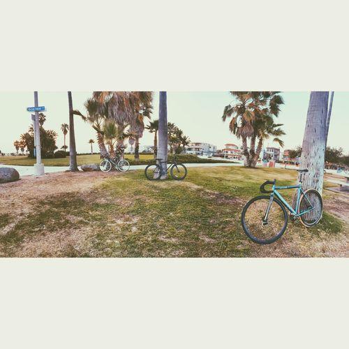The Great Outdoors - 2015 EyeEm Awards Mission Beach San Diego, CA Vinniepix