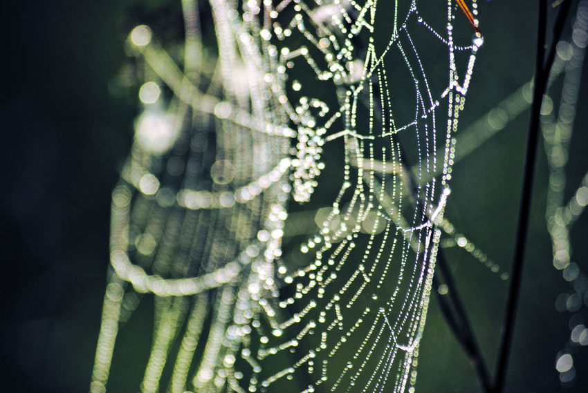 Spider Web Close-up Fragility Focus On Foreground Beauty In Nature Vulnerability  Plant No People Nature Complexity Drop Selective Focus Day Intricacy Wet Water Growth Natural Pattern Spider Outdoors Dew Web Purity