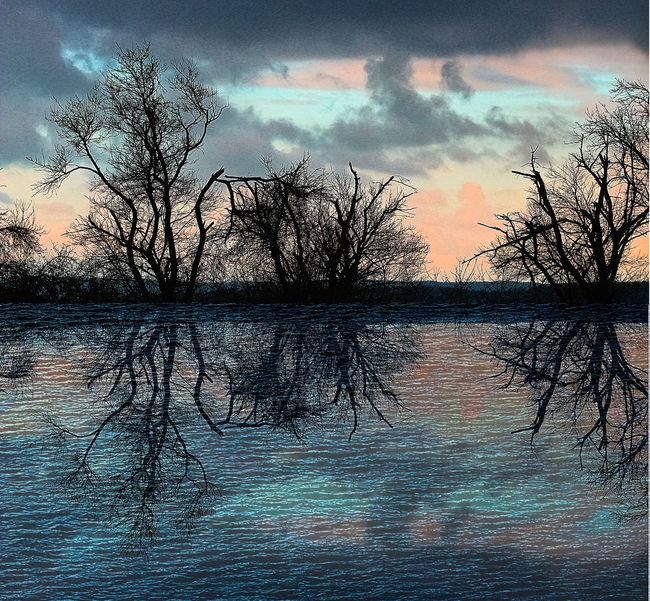 Collage Bare Tree Cloud - Sky Composite Digital Art Lake Reflection Sunset Tranquil Scene