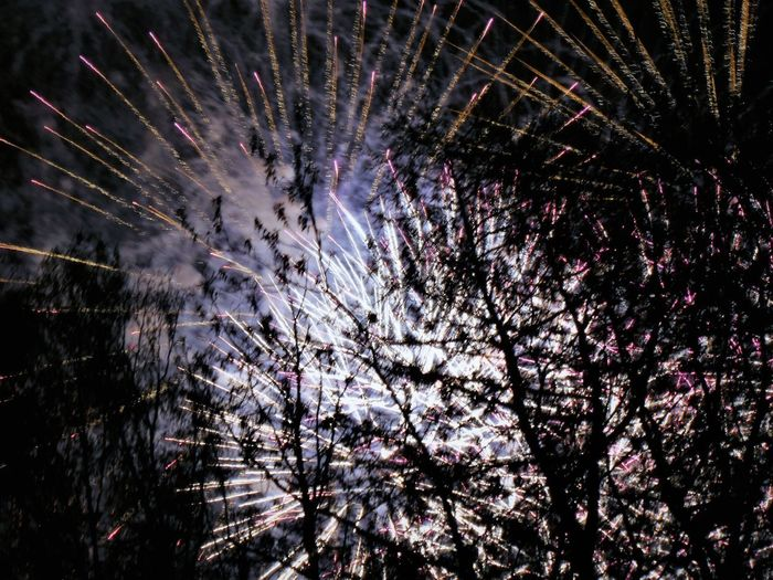 Tree Plant Nature Celebration Night Exploding No People Firework Display Low Angle View Flower Firework Branch Beauty In Nature Growth Motion Flowering Plant Event Outdoors Illuminated Long Exposure Sparks Firework - Man Made Object Purple