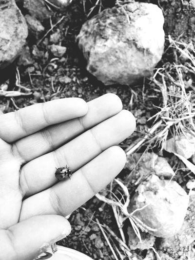Turkey Blackandwhite Ladybug Luckysunday Luckylife