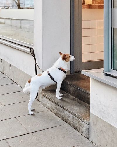Dog Pets Domestic Animals One Animal Animal Themes Mammal No People Built Structure Building Exterior Outdoors Day Waiting Waiting Dogs Waitingdog Store Shop Butcher Bakery Pet Portraits