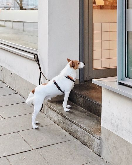 Dog standing outside store