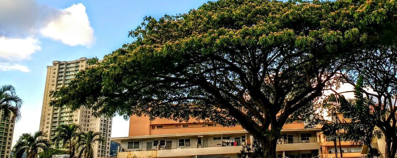 Honoluluhawaii Eyeemoutdoors The Week Of Eyeem Live For The Story Beauty In Nature Architecture EyeEm Best Shots - Landscape The Great Outdoors - 2017 EyeEm Awards