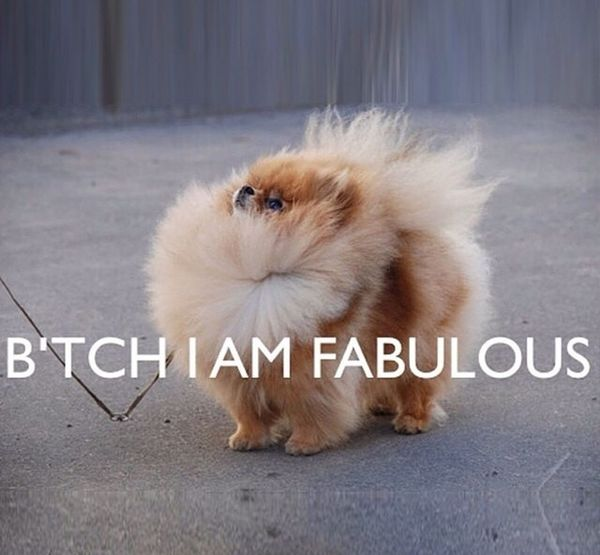 Fabulous Bitch Please Bitches I'm Fabulous Kisses❌⭕❌⭕