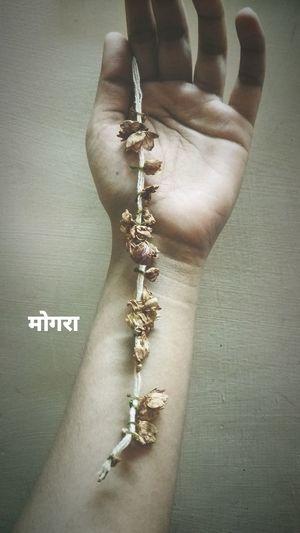 मोगरा Flower Fragnance Memories Mylove Randomclick Eyeemphotography Human Hand Text Close-up
