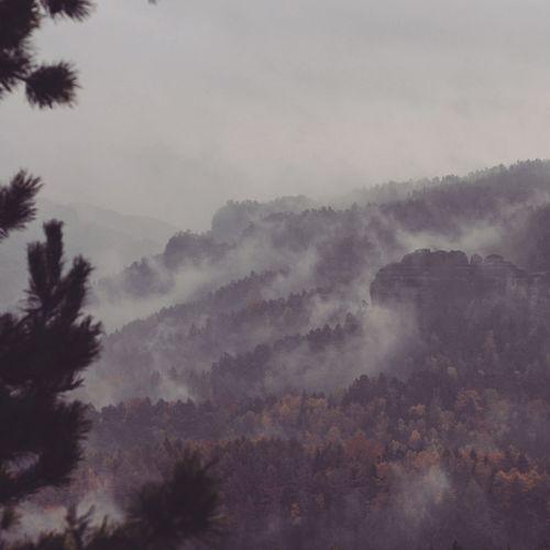 Nature Fog Outdoors Elbsandsteingebirge Sächsische Schweiz Sachsen Urlaub Nebel First Eyeem Photo