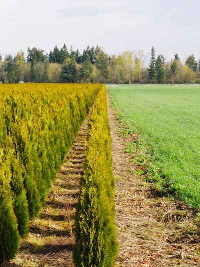 Plant Growth Landscape Field Agriculture Land Environment Nature Rural Scene Crop  Tree Grass No People Farm Green Color Scenics - Nature Tranquil Scene Tranquility