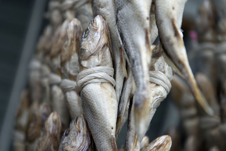 Close-up of tied fish drying outdoors