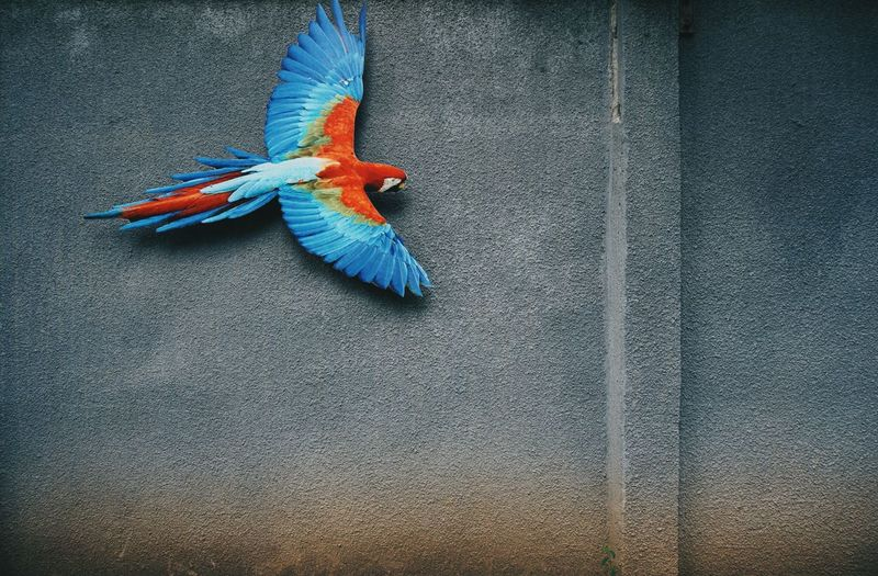 Wall Sony A6000 Getting Inspired Minimalism Minimalobsession No People Street Photography EyeEm Best Shots Taking Photos Walking Around Minimal Conceptual Exceptional Photographs EyeEm Masterclass The Week Of Eyeem EyeEm Gallery EyeEmBestPics Hello World From My Point Of View Picturing Individuality Colourful Parrot Sign Colour Of Life