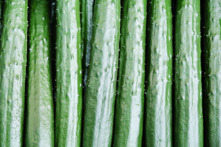 Close up image of Japanese cucumber,suhyo Cucumber Japan Japanese Food Vegetarian Food Backgrounds Close-up Cucumber Plant Day Food Food Photography Freshness Full Frame Green Color No People Suhyo Vegetable