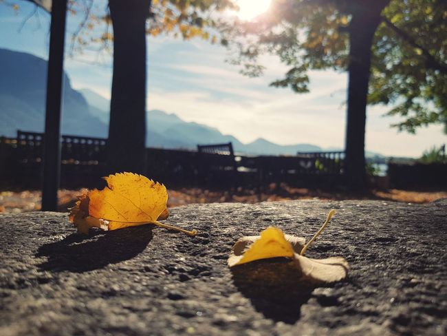 Yellow No People Sky Outdoors Day Close-up Outdoor Photography Lombardia, Italy Autunno🍁🍁🍁 Beautiful People Tree Autumn Foglie Fragility Fogliediautunno Foglie Autunnali Foglieautunnali Foglie Gialle Autunno  Fogliesecche Pietra Foglie Invernali Controluce